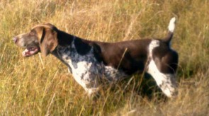 CHAMP HPR GSP Temic