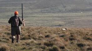 GSP HPR German Shorthair gunbdog in SA