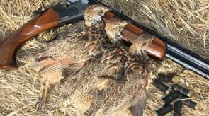 Matotoland Kennel Hpr gsp ATA Shotguns