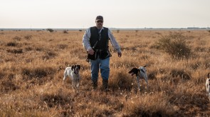 German Shorthsir Pointer GSP HPR Dogs in South Africa