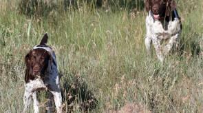 Dixie & Bonny of Matotoland