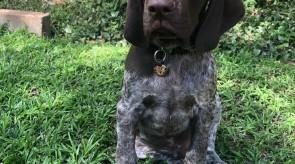 MATOTOLAND Kennel pups