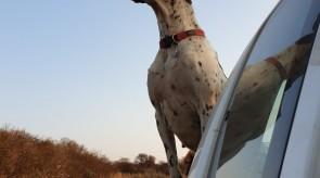 Stella Hunting
