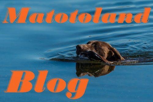 Matotoland Blog